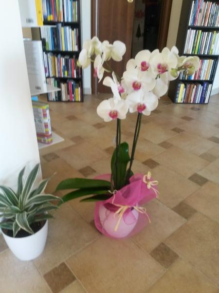 orchidea-sonounamamma