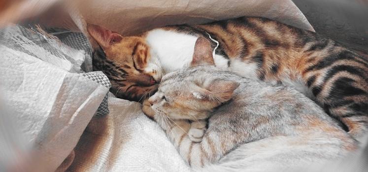 stretti-in-un-unico-abbraccio