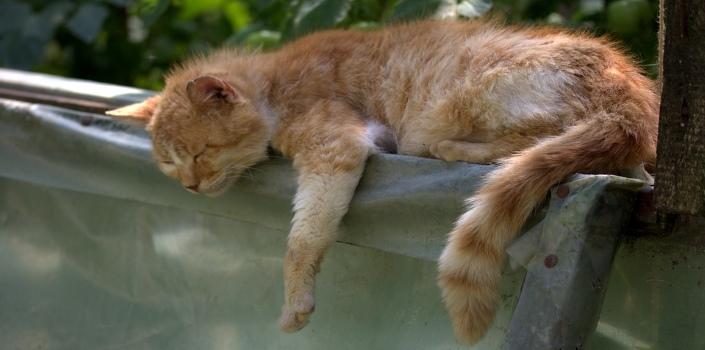 come una gatta stanca anche una mamma getta la spugna